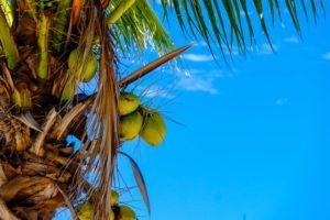 Creamy Sea Breeze Coconut Lotion